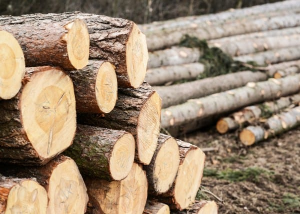 Wood Logs Ready for Splitting