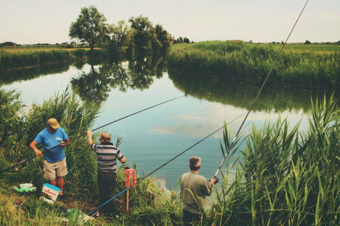 Best Bait for Fishing