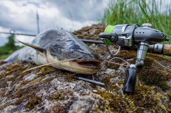 Best Baits for Catfish