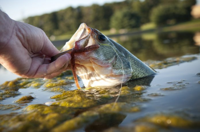 Can Bass See Braided Line?