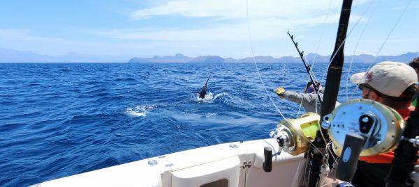 Offshore Baitcasting Reel Explained
