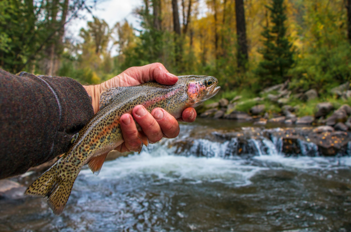 Is Trout Fishing Good During/After It Rains
