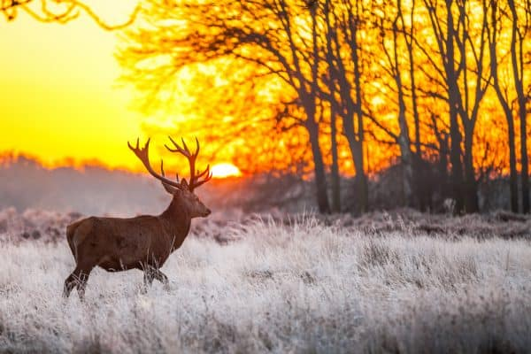 Best Time of Day to Hunt Deer During Late Season