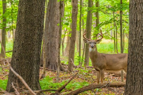 Best Time to Hunt Deer During Early Season