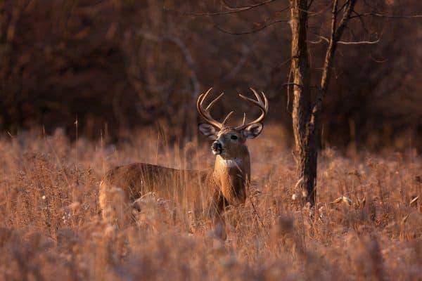 Deer Are Smart During Late Season Hunting