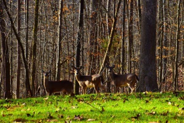 Hunting Deer During Mid Season