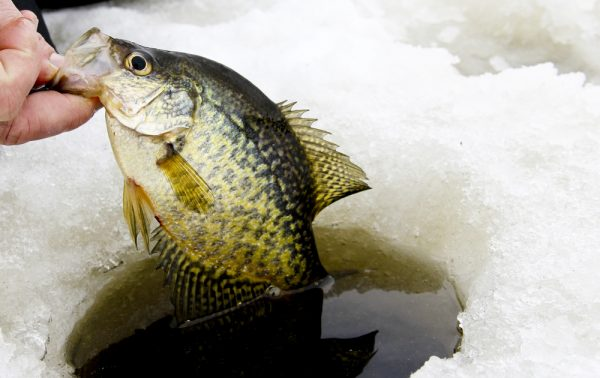 Shallow Ice Fishing