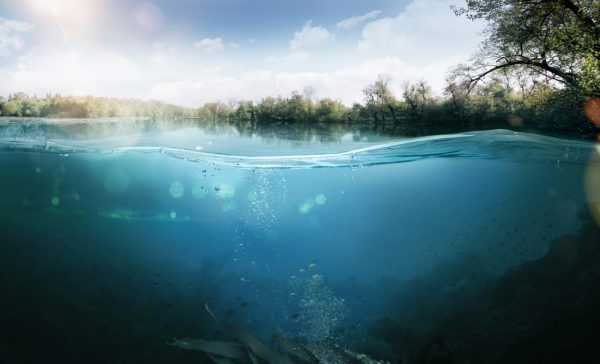 Texas Rig Fishing vs. Water Clarity