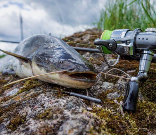 Are Catfish Bottom Feeders?